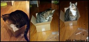 Lilli in the box